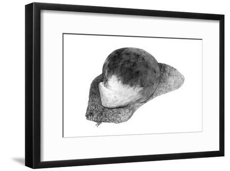 Abstract White Creature on a Rock-Ryuichirou Motomura-Framed Art Print