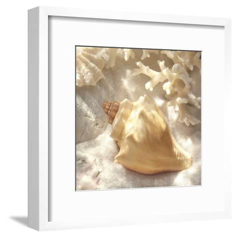 Coral Shell IV-Donna Geissler-Framed Art Print