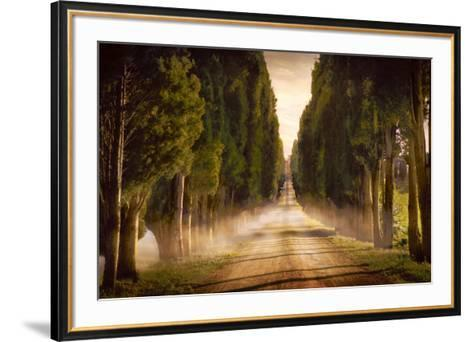 Cypress Lined Road II, Siena Tuscany-Jimmy Williams-Framed Art Print