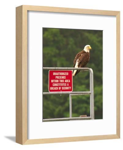 America Under Eagle Watch-Charles Glover-Framed Art Print