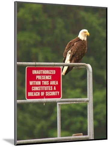 America Under Eagle Watch-Charles Glover-Mounted Giclee Print