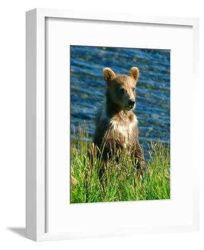 Kodiak Bear Cub-Charles Glover-Framed Art Print