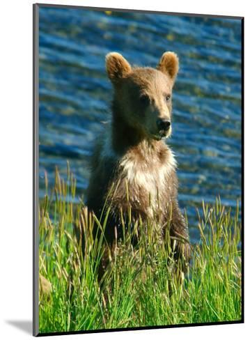 Kodiak Bear Cub-Charles Glover-Mounted Giclee Print