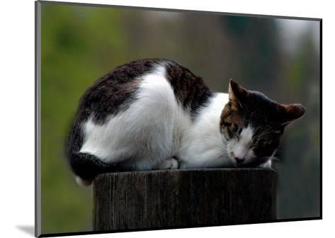Cat Nap-Stephen Lebovits-Mounted Giclee Print