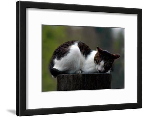 Cat Nap-Stephen Lebovits-Framed Art Print
