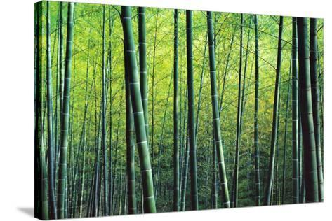 The Bamboo Grove-Robert Churchill-Stretched Canvas Print