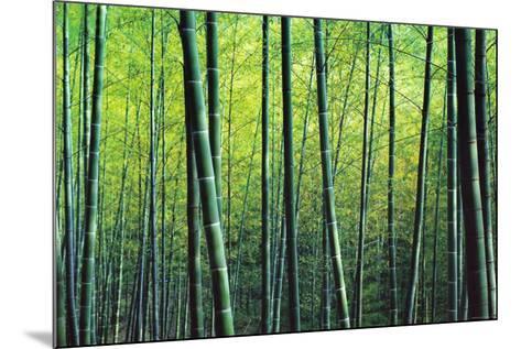 The Bamboo Grove-Robert Churchill-Mounted Art Print