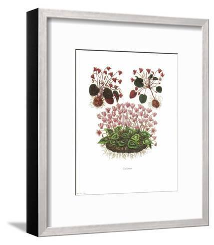 Cyclamen--Framed Art Print