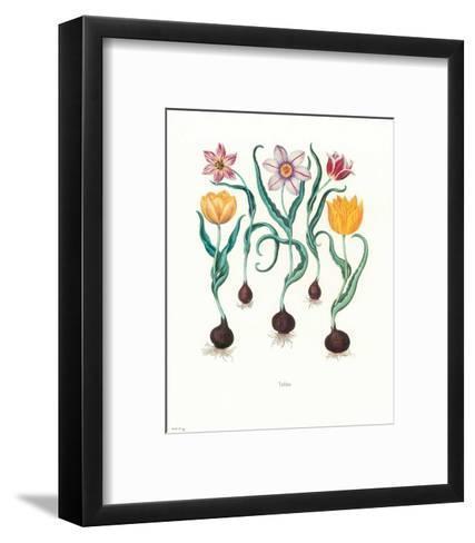 Tulipa--Framed Art Print