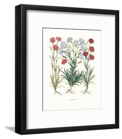 Caryophyllus--Framed Art Print