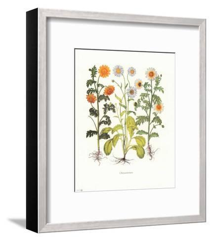 Chrysantemum--Framed Art Print