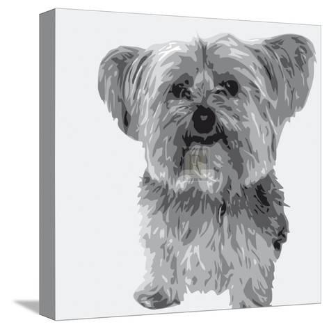 Yorkie-Emily Burrowes-Stretched Canvas Print
