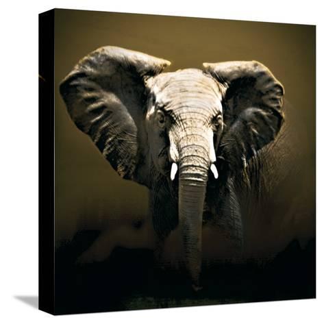 On Safari-Bobbie Goodrich-Stretched Canvas Print