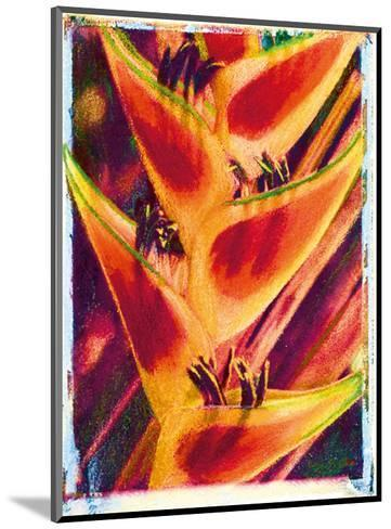 Hawaiian Heliconia-Joanne Bolton-Mounted Art Print