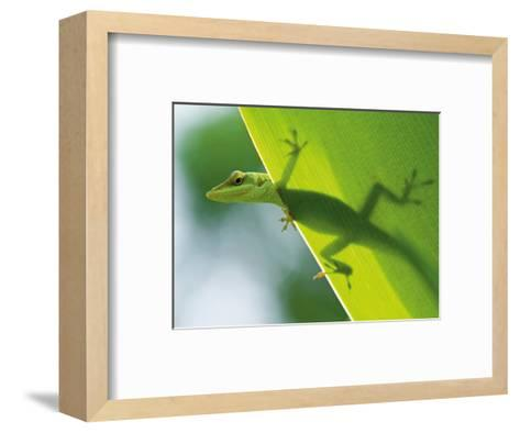 Here's Looking at You Kid, Hawaiian Green Gecko-Devon Stevens-Framed Art Print
