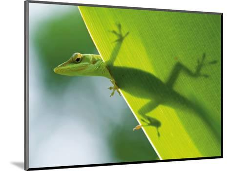 Here's Looking at You Kid, Hawaiian Green Gecko-Devon Stevens-Mounted Art Print