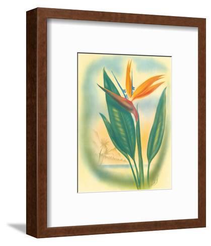Hawaiian Bird of Paradise, c.1940s-Ted Mundorff-Framed Art Print