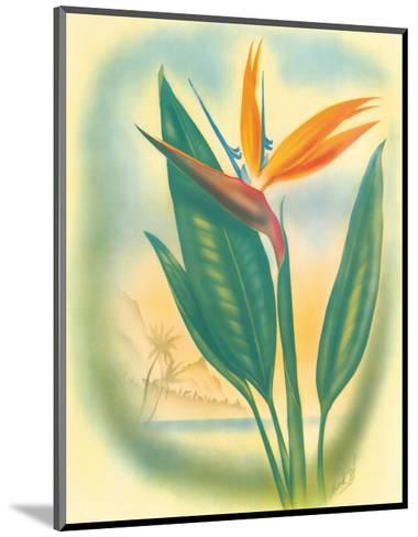 Hawaiian Bird of Paradise, c.1940s-Ted Mundorff-Mounted Art Print