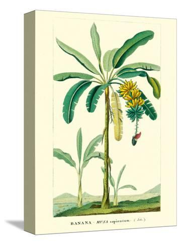 Banana Tree, Botanical Illustration, c.1855-Ch^ Lemaire-Stretched Canvas Print