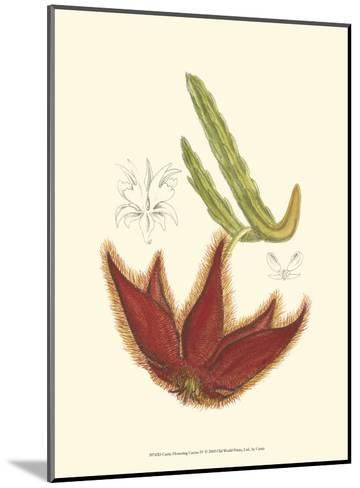 Flowering Cactus IV-Samuel Curtis-Mounted Art Print