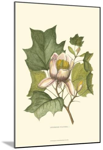 Tulip Tree--Mounted Art Print