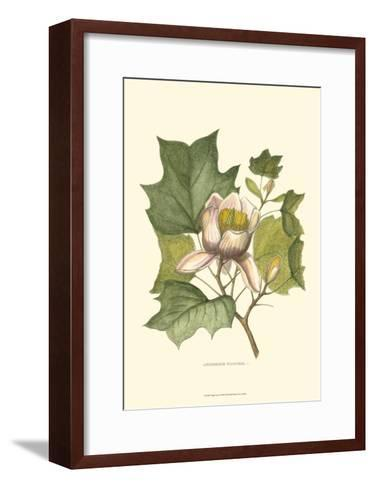 Tulip Tree--Framed Art Print