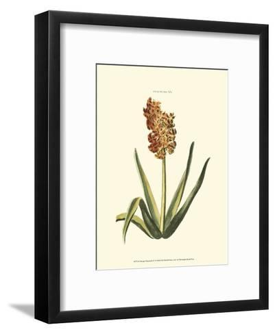 Antique Hyacinth XV-Christoph Jacob Trew-Framed Art Print