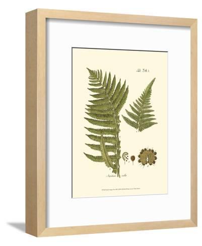 Small Antique Fern III--Framed Art Print