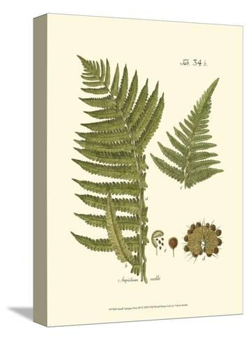Small Antique Fern III--Stretched Canvas Print