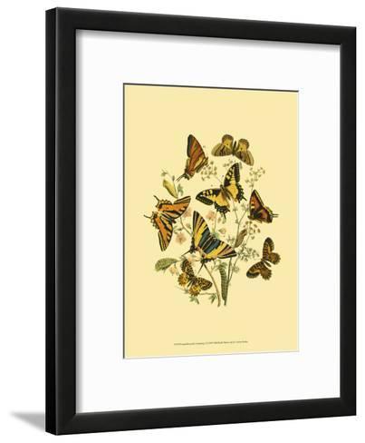 Small Butterfly Gathering I--Framed Art Print
