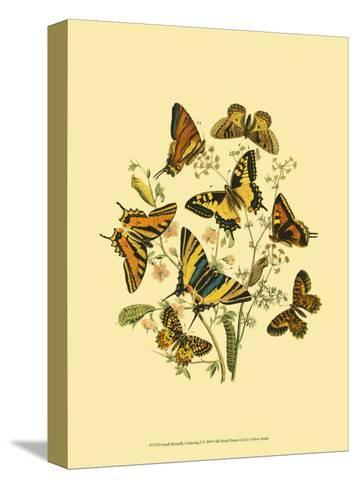 Small Butterfly Gathering I--Stretched Canvas Print