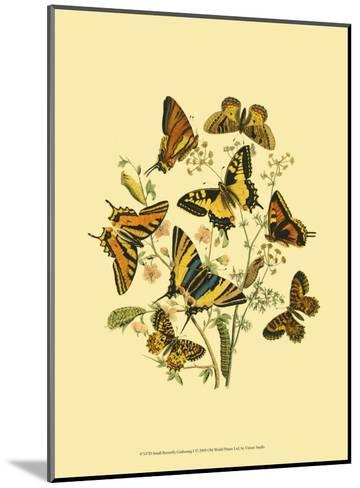 Small Butterfly Gathering I--Mounted Art Print