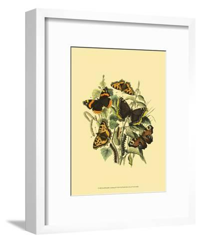 Small Butterfly Gathering II--Framed Art Print
