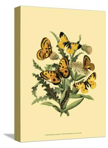 Small Butterfly Gathering IV--Stretched Canvas Print