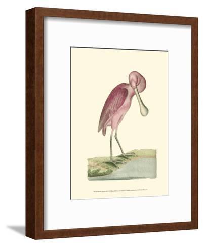 Roseate Spoonbill-Frederick P^ Nodder-Framed Art Print