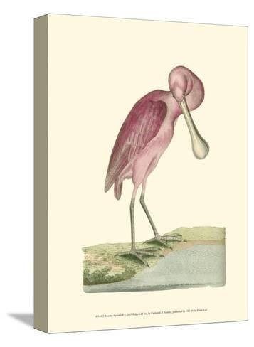 Roseate Spoonbill-Frederick P^ Nodder-Stretched Canvas Print