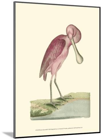 Roseate Spoonbill-Frederick P^ Nodder-Mounted Art Print