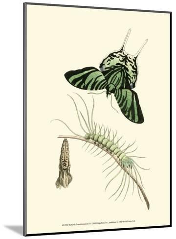 Butterfly Transformation II--Mounted Art Print