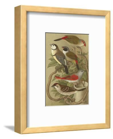 Petite Songbirds II-Cassel-Framed Art Print