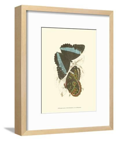 Butterflies VI-Sir William Jardine-Framed Art Print