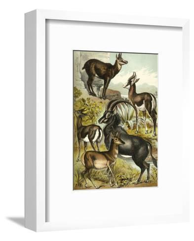 Antelope-Henry J^ Johnson-Framed Art Print