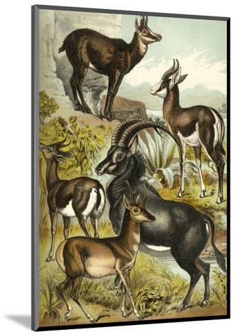 Antelope-Henry J^ Johnson-Mounted Art Print