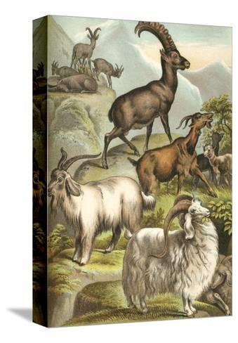 Goats-Henry J. Johnson-Stretched Canvas Print