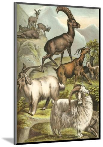 Goats-Henry J. Johnson-Mounted Art Print