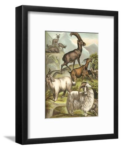 Goats-Henry J. Johnson-Framed Art Print