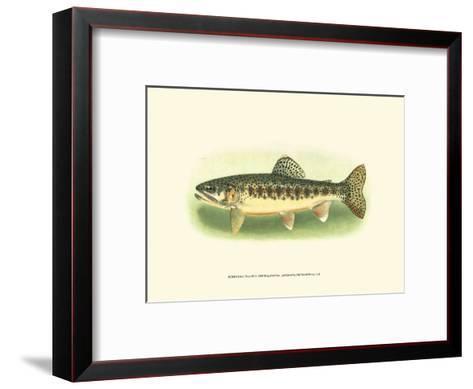 River Trout III--Framed Art Print