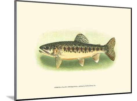 River Trout III--Mounted Art Print