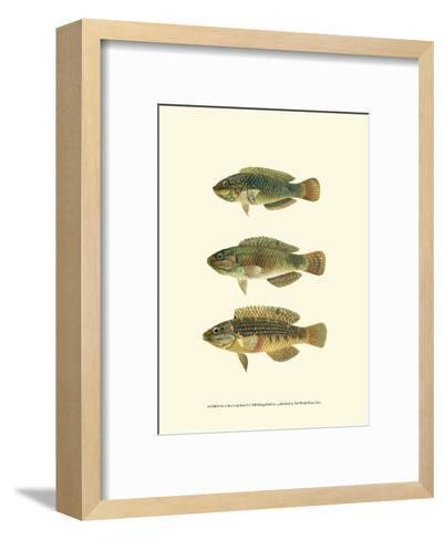 Fish of the Coral Reef I--Framed Art Print