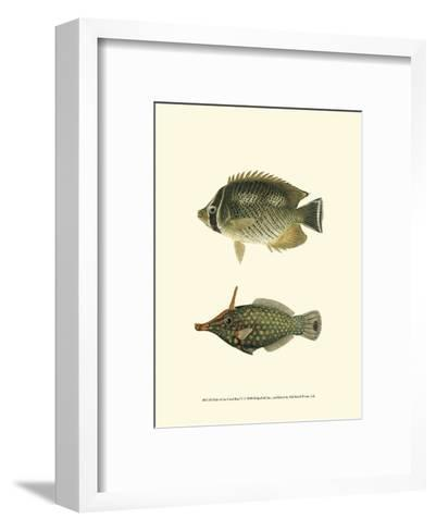 Fish of the Coral Reef V--Framed Art Print