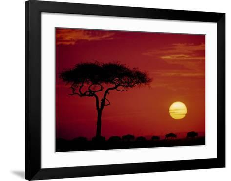 Wild Beast Migration, Masai Mara, Kenya-Dee Ann Pederson-Framed Art Print